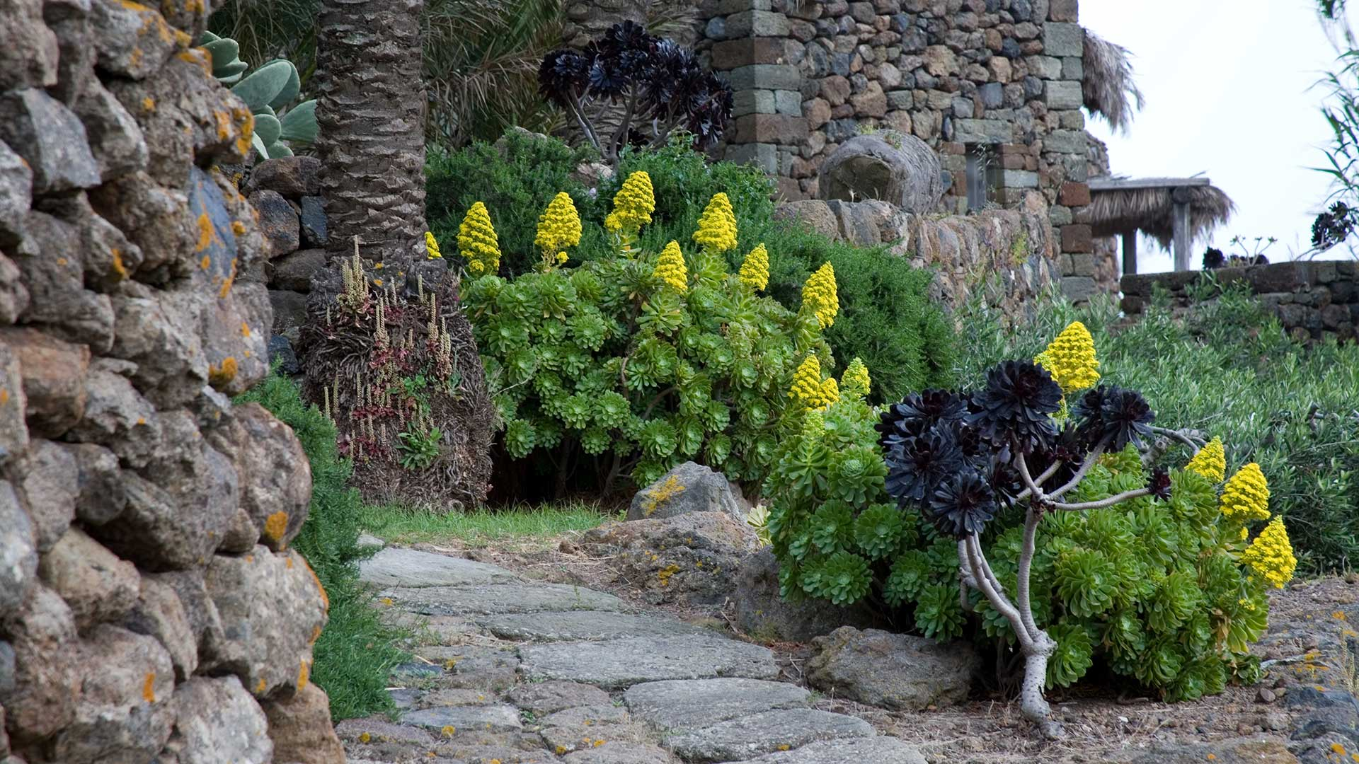 I rosmarini progettazione realizzazione gestione for Giardini mediterranei